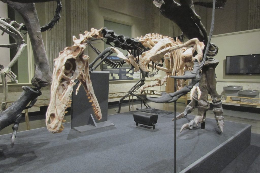 Dinosaur Discovery Museum in Kenosha